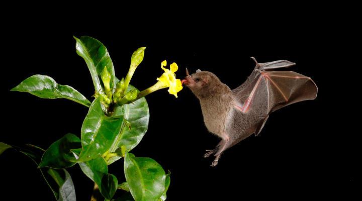 Was fressen Fledermäuse?