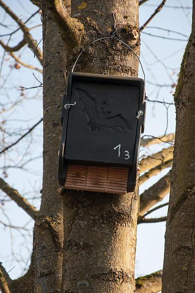 Fledermauskasten an Baumstamm
